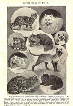 Some Costly Pets illustration for magazine article, United Kingdom, date unknown, by Louis Wain. Adjusted for inflation, in 2014 these cats would cost between £4,000 and £10,000!