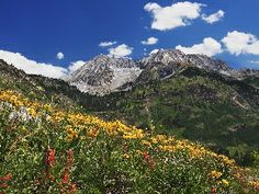 Spring Wildflowers in Alpine Meadow at Lead King Basin in Marble, Colorado.
