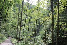 Hiking path Salzburg, Paths, Hiking, Nice, Walks, Trekking, Nice France, Climbing, Walkways