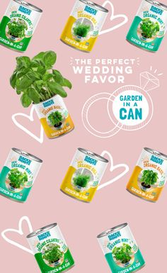 Mint Garden, Herb Garden, Grow Organic, Herbs Indoors, Garden Gifts, Perfect Wedding, Wedding Favors, Gadgets, Gardening