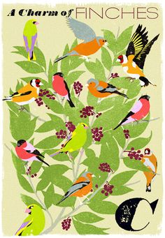'A Charm Of Finches' Print by Woop Studios. Collective nouns brought to life in a limited edition print by the Graphic Designers of the Harry Potter films. Childrens Alphabet, Childrens Bedroom, Alphabet Book, Collective Nouns, Unusual Presents, Limited Edition Prints, Bird Art, Beautiful Birds, Beautiful Things