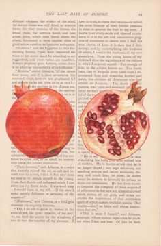 cyber monday free shipping - dictionary art vintage sliced POMEGRANATE print - vintage art book page print - Free Shipping