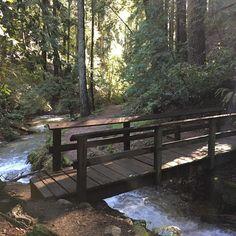 Henry Cowell Fall Creek Unit - Bennet Creek Trail #RunningOnReefer #CannabisKeepsMeActive #SpringGel #MoonMansMistress #SantaCruz #Cannabis #TrailRunning #UltraRunning #Adventureprenure #HighAdventure #PaddleLife #TrainingMatters #NectarStick #RunSteepGetHigh #RunSlowGetFast #MAF #FallCreek