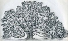 how-to-draw-an-oak-tree15.jpg (1000×603)