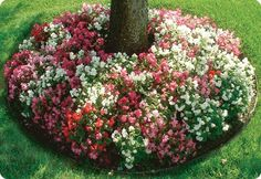 How to create tree flower beds - good advice for making a bed at the base of a tree - do in front yard but use herbs and xeriscape plants. Outdoor Planters, Outdoor Landscaping, Front Yard Landscaping, Outdoor Gardens, Landscaping Jobs, Landscaping Software, Luxury Landscaping, Landscaping Company, Landscaping Around Trees