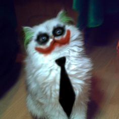 19 Frighteningly Funny Halloween Costumes for Cats