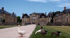 Les oies Elles vous accueillent au château !