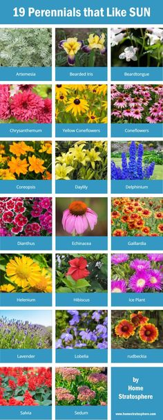 19 perennials that like the sun. Design your own garden: https://www.homestratosphere.com/goto/plan-a-garden/