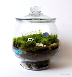 The Truth is Out There by MossLoveTerrariums on Etsy
