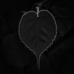 💜 #heart #heartwarming #naturalbeauty #leafs #nature_shooters #na_natures_art #heart_imprint #fotocatchers #seekingbeauty #ig_namaste #inthemoment #artofnature #ig_worldclub #fiftyshadesofgrey #fiftyshadesofnature #art #symbolism #nature_perfection #sombrescapes #inthemoodfor_macro #photooftheday #igdaily #texture