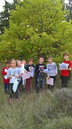 Sortie « ARBRES » sur la colline de la Graille – Nov 2016 - Ecole primaire Jean Moulin à Saint Saturnin les Avignon