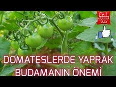 Beautiful Gardens, Habitats, Farmer, Youtube, Make It Yourself, Instagram, Gardening, Exercises, Tomatoes