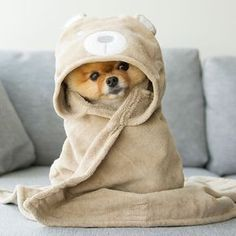 Find images and videos about dog and doggy on We Heart It - the app to get lost in what you love. Cute Little Puppies, Cute Dogs And Puppies, Baby Dogs, I Love Dogs, Doggies, Puppies Puppies, Bulldog Puppies, Baby Baby, Baby Animals Super Cute