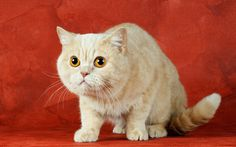 Beautiful Adorable Ginger Cat Download Image Pictures « Pin HD Wallpapers