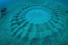 Yoji Ookata, Mystery Circle, puffer fish, crop circle, underwater design, Art, Animals, Water Issues, japan, deep-sea photography