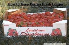 How to keep strawberries longer, plus some recipes, from Satisfying Eats, http://satisfyingeats.wordpress.com/2013/04/29/some-of-my-favorite-strawberry-recipes-and-how-to-keep-strawberries-fresh-longer/