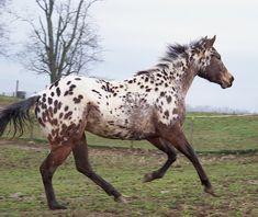 Earthlight-Cowgirl