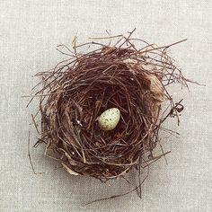 Bird Nest by David Torrence