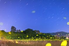 Ropa Valley in light of fireflies - Ropa Valley in light of fireflies Stellar Traces over Livadi Ropa Corfu with fireflies play among the plants Fireflies, Corfu, Golf Courses, Play, Outdoor, Outdoors, Outdoor Games, The Great Outdoors, Glow Worms