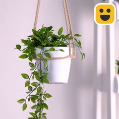 Blue Butterfly Discover DIY Plant Hanger Hang your plants like a macrame plant hanger. It ads a truly unique touch to your home. Here is a short tutorial on how to DIY Diy Crafts Hacks, Diy Home Crafts, Rope Crafts, Jar Crafts, Recycled Crafts, Bottle Crafts, House Plants Decor, Plant Decor, Home Plants