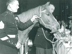 Sgt Reckless - a military horse.