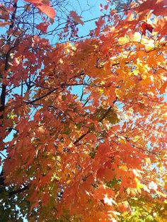 Full of Joy Blog: Fall Yoga