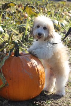 Parker and out pumpkin we picked