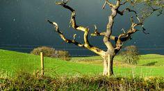 My favourite dead tree.
