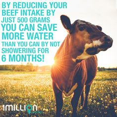 Recycling Facts, Global Warming, How To Plan, Centre, Join, Animals, Meat, Twitter, Animales