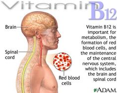 Vitamin B12 is a nutrient that helps keep the body's nerve and blood cells healthy and helps make DNA, the genetic material in all cells. Vitamin B12 also helps prevent a type of anemia called megaloblastic anemia that makes people tired and weak.