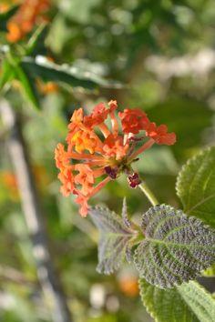 Flor Reserva ecológica