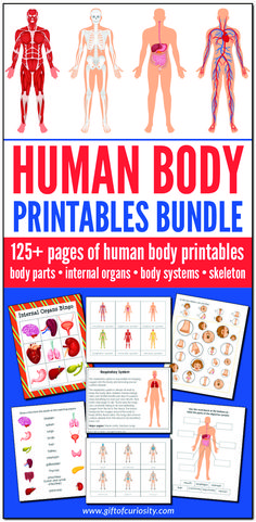 The Human Body Printables Bundle features more than 125 pages of human body printables focused on body parts, internal organs, body systems, and the skeleton. This bundle includes printables appropriate for preschool through elementary school, and will be Human Body Science, Human Body Activities, Human Body Unit, Human Body Systems, Human Body Parts, The Human Body, Science Gifts For Kids, Science Teacher Gifts, Science Crafts