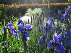 For over a decade, Mark and Abbie have been looking at modern trends in perennial gardening, variously described as 'Dutch New Wave', 'New Perennials' and the 'New Naturalism'. This has culminated in the planting of new summer gardens. Join them for morning tea and a talk on key points they have distilled from visiting over 90 gardens in England, France and Italy, tracking the work of six key contemporary designers and how they have applied this in their own garden, Tikorangi - The Jury… Summer Garden, Contemporary, Modern, Planting, Perennials, Dutch, Designers, Join, How To Apply