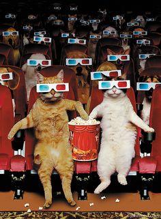 """Animal Antics"" by John Lund - Dieren kunst en humor - Cinema Funny Animal Pictures, Funny Animals, Cute Animals, Lund, Film Trailer, Arte Hip Hop, Pets Movie, Image Chat, Movie Prints"