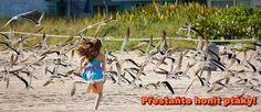 Přestaňte honit ptáky!