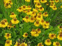 Piet Oudolf's Top 100 plants