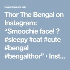 """Thor The Bengal on Instagram: """"Smoochie face! 😍 #sleepy #cat #cute #bengal #bengalthor"""" • Instagram"""