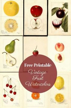 A curated collection of beautiful vintage watercolor fruit paintings. These would look gorgeous on a gallery wall in any kitchen or dining room.