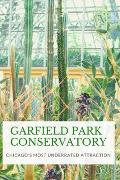 Garfield Park Conservatory: one of the best free things to do in Chicago! imagine stepping into a tropical forest combined with an art exhibit. Click for more photos!
