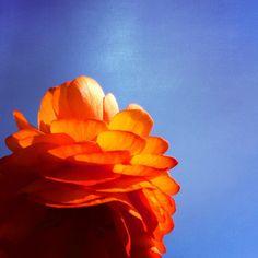 Wenn der Frühling sich auftut // #grafinesse #picturesque #frühling