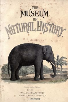 Frontispiece to - The Museum of Natural History...W.Mackenzie  c1859-1862