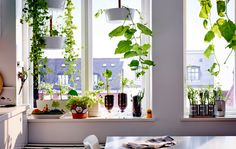 Come see 5 easy plant projects that use old stuff from around the house and can be grown right on the windowsill.