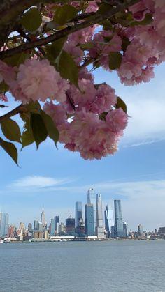 San Francisco Skyline, New York Skyline, Seasons, Spring, Travel, Viajes, Seasons Of The Year, Destinations, Traveling