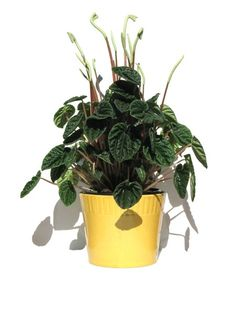 3 easy to grow house plants