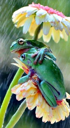 And here I thought frogs liked being wet...