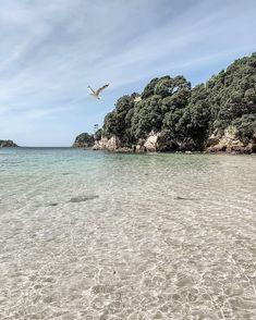 Paradise in my own backyard. Hahei Beach, Coromandel, New Zealand New Zealand, Ash, Paradise, Backyard, Water, Travel, Outdoor, Instagram, Gray