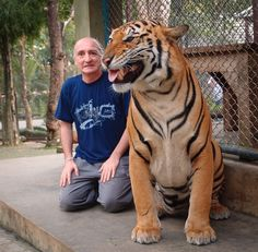 Tiger Kingdom, Chang Mai, Thailand