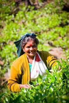 Zapálená kuchařka   –  Srí Lanka