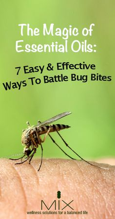 The Magic of Essential Oils: 7 Easy & Effective Ways To Battle Bug Bites - MIX Wellness Natural Home Remedies, Natural Healing, Herbal Remedies, Health Remedies, Natural Oils, Essential Oil Uses, Doterra Essential Oils, Young Living Oils, Young Living Essential Oils