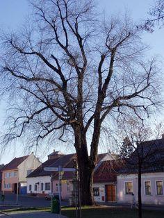 Fotogalerie | Rousínov.cz - oficiální stránky města